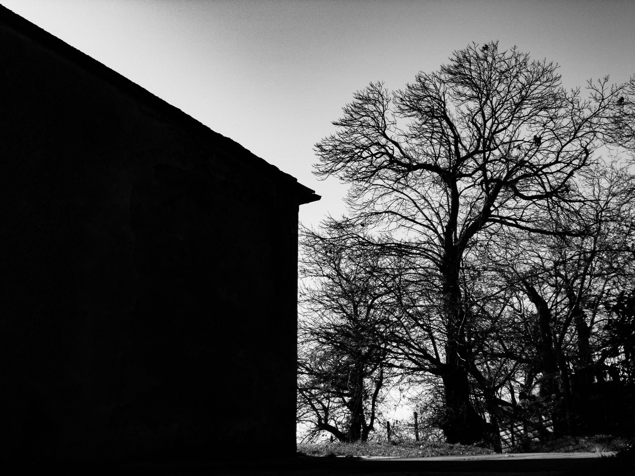 video emozionali: nell'immagine la sagoma di una casa e di un albero